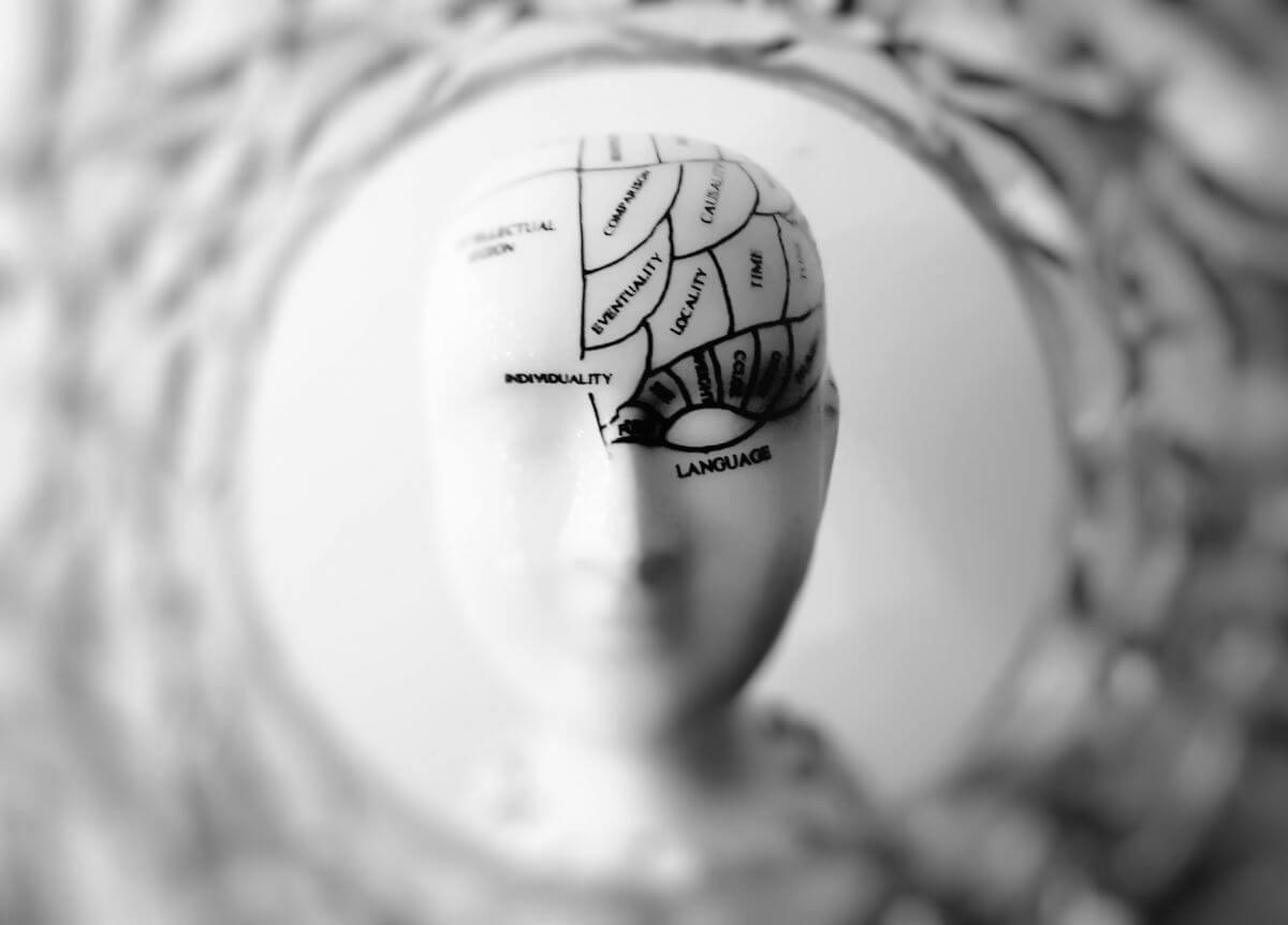 parties du cerveau mannequin